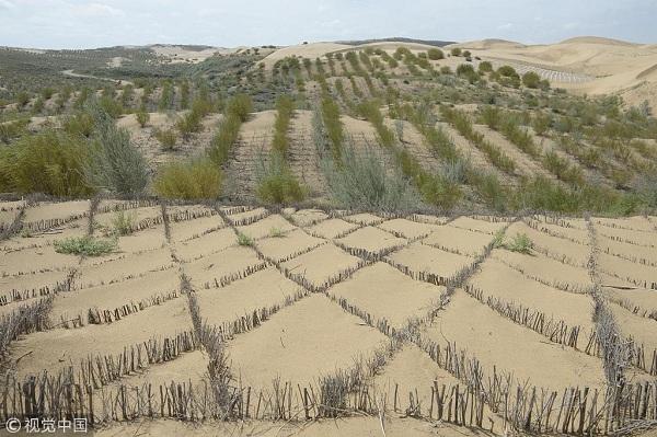 2018年7月21日,网格状的沙柳在沙漠上,起到固沙的作用。据悉,库布齐沙漠是中国第七大沙漠,位于内蒙古西南的鄂尔多斯市,是离北京最近的沙漠,总面积约1.39万平方公里。经过30多年来几代治沙人的努力,库布齐沙漠近三分之一面积得到治理,生态资源逐步恢复,并逐渐形成沙漠旅游、食品的产业链。 刘文华(内蒙古分社)中新社视觉中国.jpg