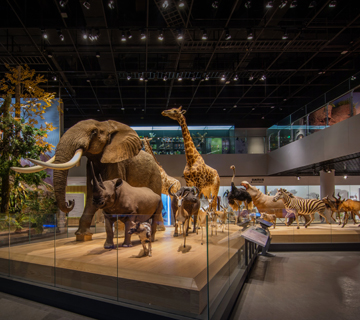 Permanent exhibitions of Zhejiang Museum of Natural History, Anji Branch