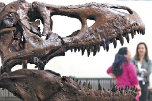World's smallest stegosaurus track found in Xinjiang