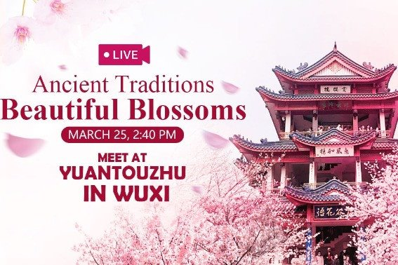 Watch it again: Expats tour Wuxi in cherry blossoms