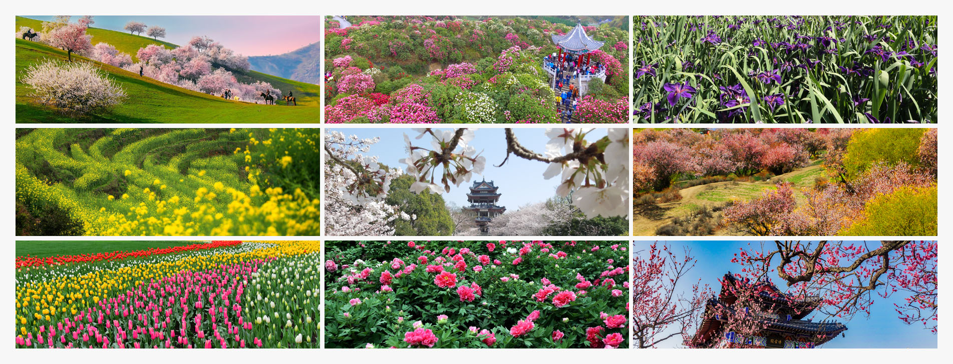 Spring delight: 9 recommended destinations to see blossom in China