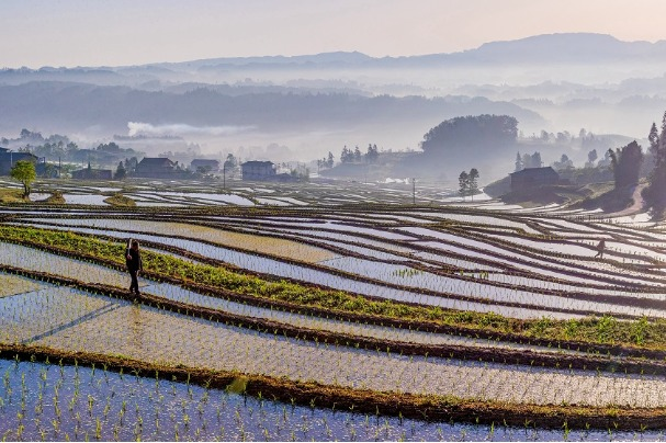 Morning mist blankets farmlands in Chongqing